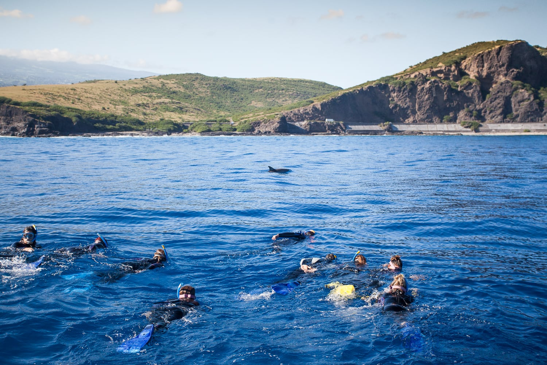 Nager avec les baleines et les dauphins à l'ile de la Réunion