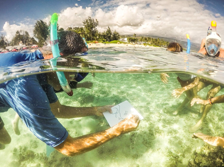 Découvrir le lagon de l'ile de la Réunion en le dessinant...sous l'eau !